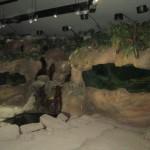 Pojďte v zoo Praha sledovat život mloků pod hladinou