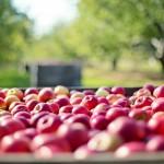 Jak zužitkovat přebytečné letní ovoce